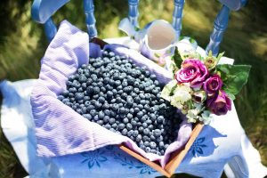 blueberries-870515_1920