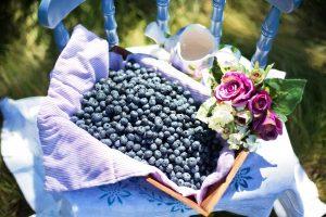 blueberries-870515_1920